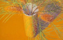 Orange, Vase, Banksia Spinosa