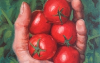 15-tomatoes-in-hand-by-caroline-thew-25-x-20-cm