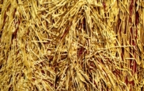 Close up of Hay Bale paint detail