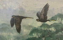 Close up of Black Cockatoos in 'Heading Home'